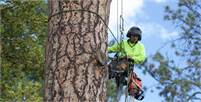 Tree Trimming and Chipping in Edmonton | Arbor All Tree Care