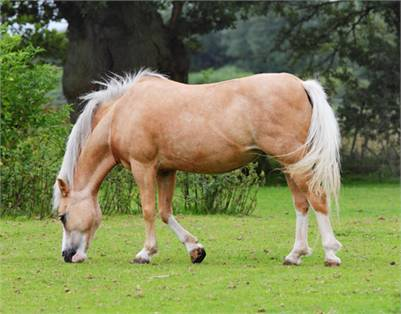 Beautiful Palamino Horse - This is a Sample Listing