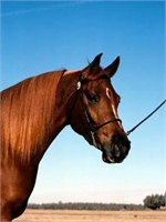 A Great Horse - This is a Sample Listing