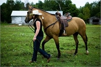 Horse for Lease - This is a Sample Listing